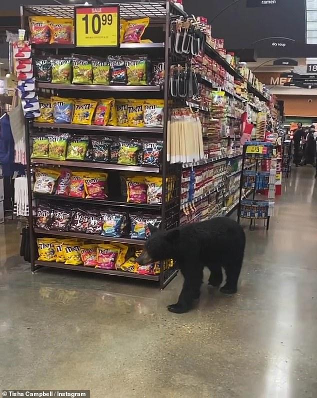 guloso?  O urso foi visto remexendo na seção de doces do supermercado