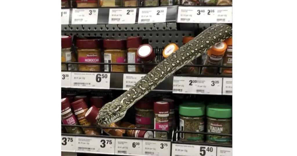 Uma mulher encontra uma cobra de 3 metros em um supermercado australiano